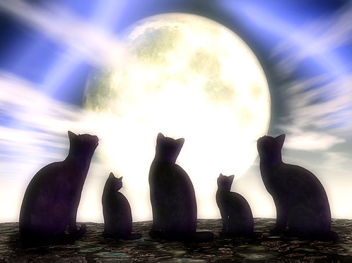 Kitty Gathering in the Moonlight