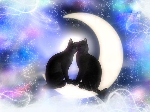 Kitties Snuggling on the Moon