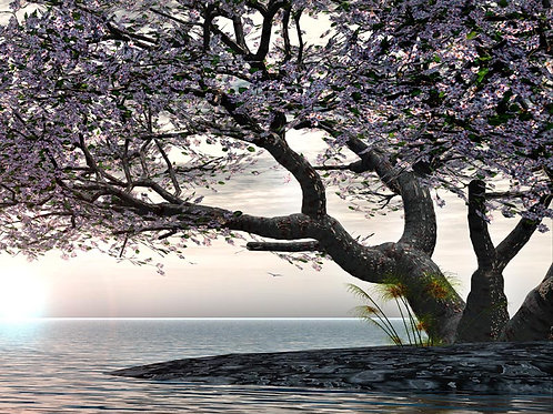 Shoreline Reflections Dream