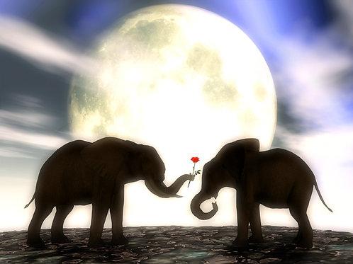 Elephant Romance