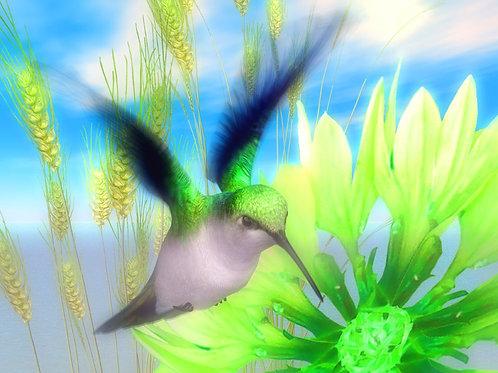 Emerald Hummingbird Flight