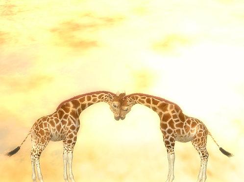 Giraffe Snuggle