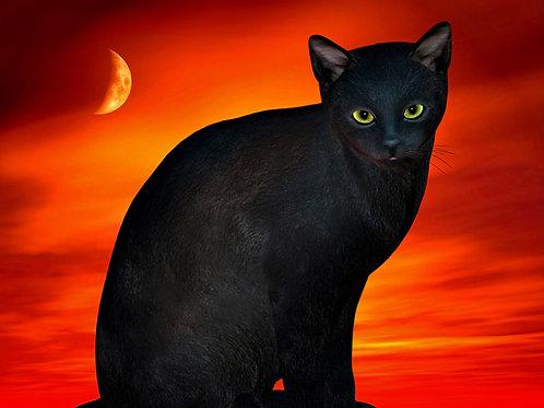 Boo the Halloween Kitty