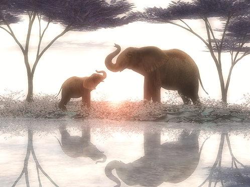 Baby Elephant Admire