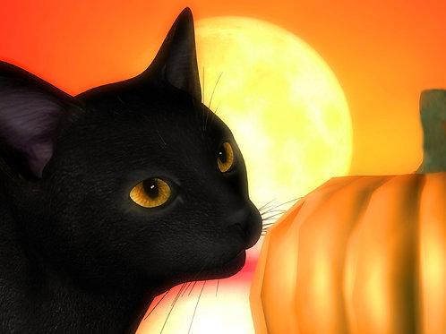 Autumn Kitty Sight