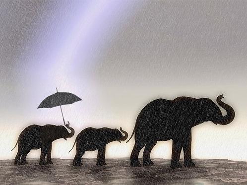 Elephants Walking in the Rain