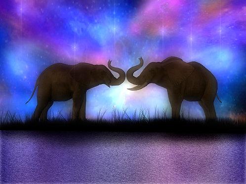 Elephant Love Starlight