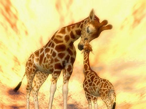 Baby Giraffe Admire