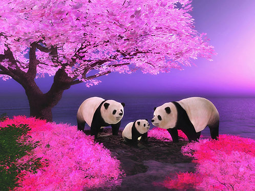 Panda Family Along the Shore