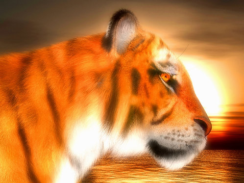 Tiger Sunset