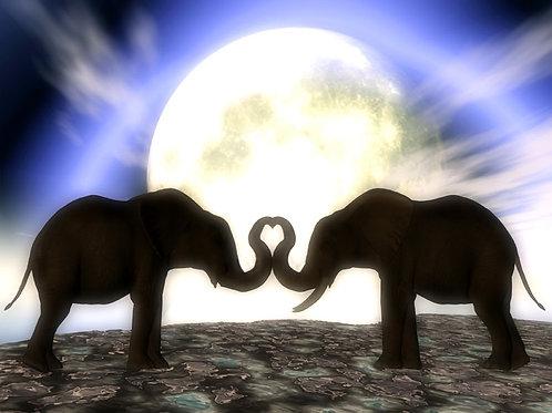 Elephants in Love in the Moonlight
