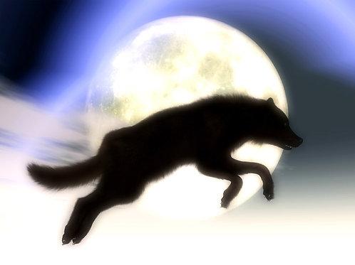 Wolf Midnight Leap