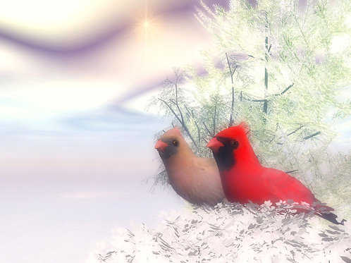Winter Cardinals Enjoying Life