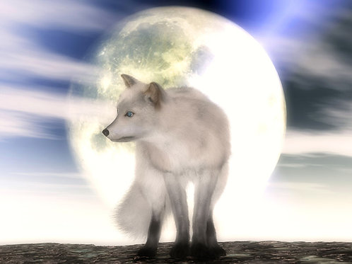 Arctic Fox at Midnight