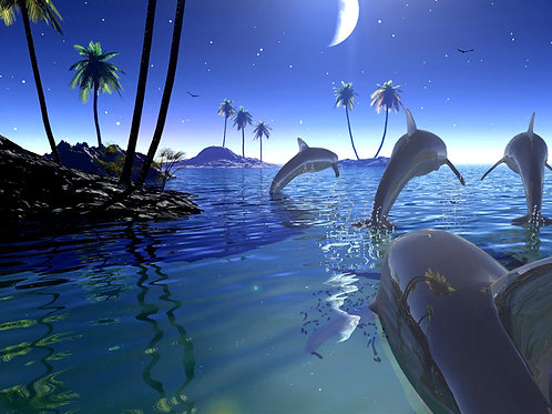 Dolphins in the Moonlight