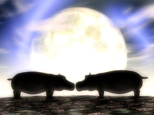 Hippos in Love in the Moonlight