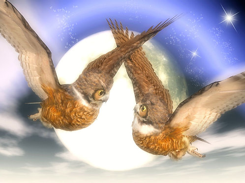 Owls in Flight