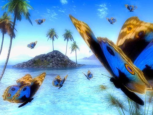 Blue Tropical Butterflies in the Islands