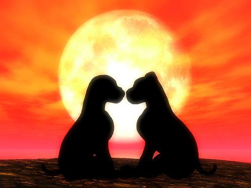 Puppy Love Twilight