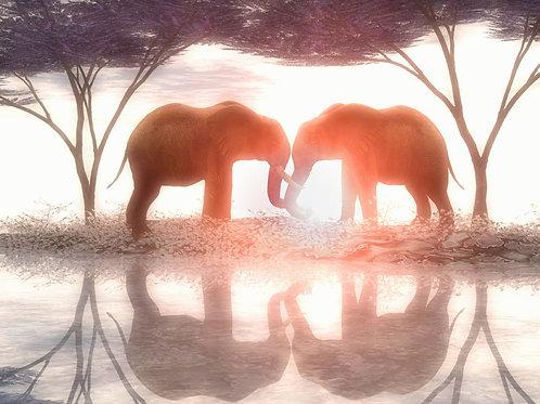 Elephant Romance in Harmony