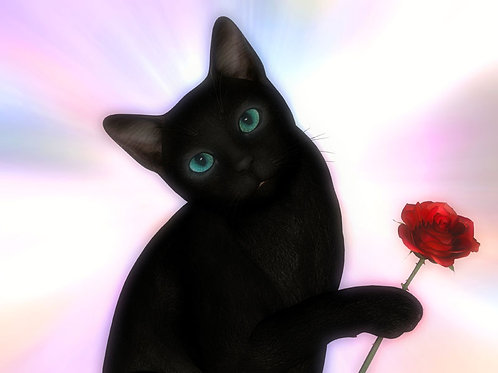 Kitty Giving You a Rose
