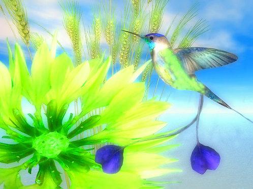 Spatuletail Hummingbird in Paradise