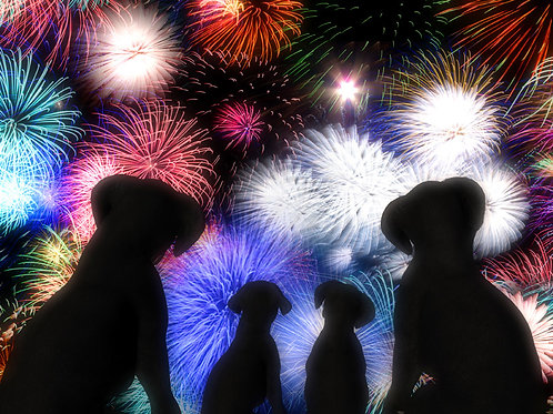Puppy Family Fireworks