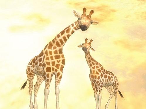 Baby Giraffe Cherish