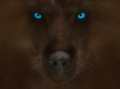 Blue Eyed Wolf Stare