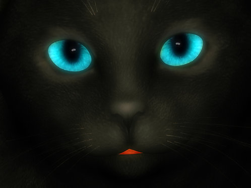 Kitty Blue Eyed Stare