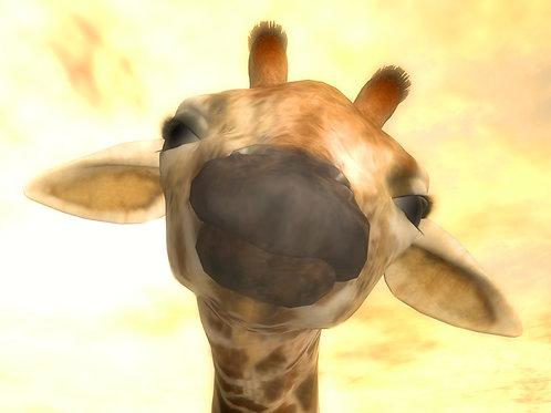 Baby Giraffe Curiosity