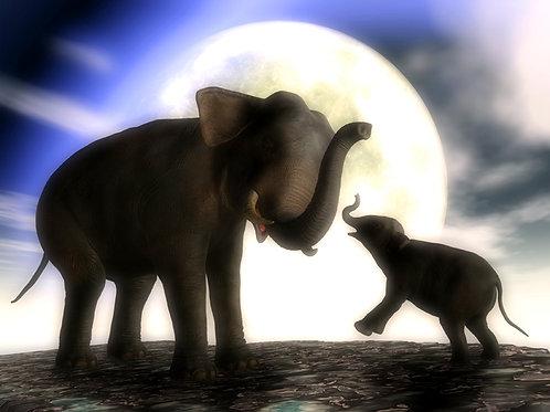 Elephant Baby Joy