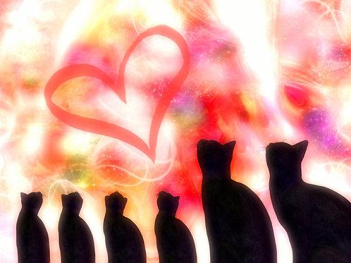 Kitty Family Love