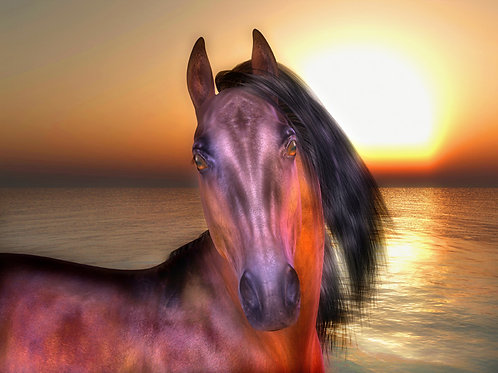 Horse by the Shoreline