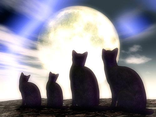 Kitty Family in the Moonlight