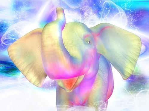 Baby Elephant Mystique