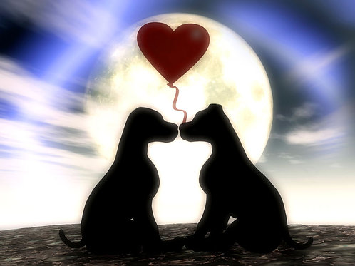 Puppy Love Dream