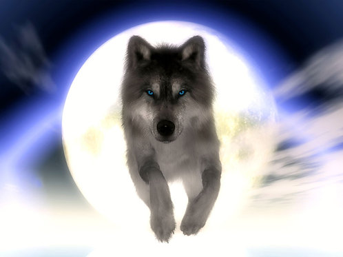 Wolf Leaping at You