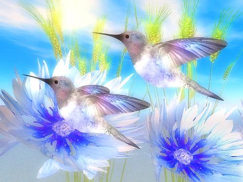 Blue Paradise Hummingbirds in the Sun