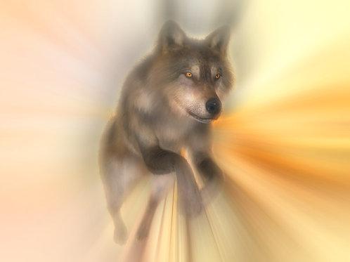 Wolf Leap at Daylight