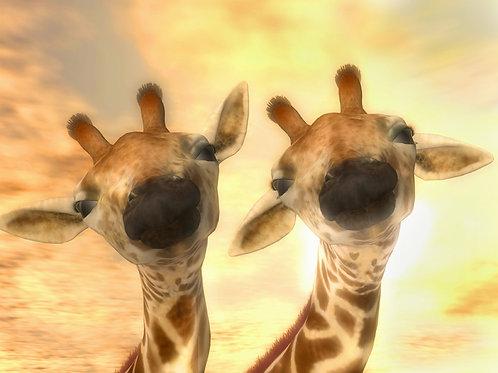 Baby Giraffe Duo