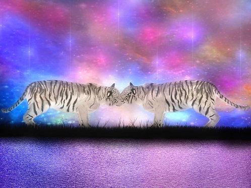 Tigers in Love in the Starlight