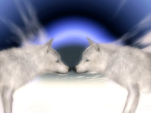 Arctic Wolves in Love