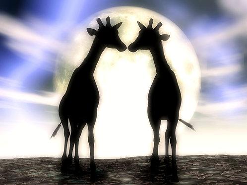 Giraffe Romance