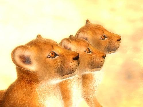 Lion Cub Trio