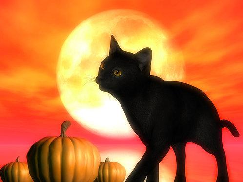 Autumn Kitty Night