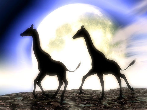 Giraffes Running in the Moonlight