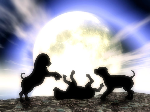 Puppies Playing in the Moonlight
