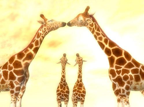Giraffe Parents Sneaking a Kiss