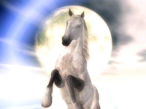 Moonlight Dapple Horse